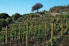Drinking wine on top of a volcano? Yes! Cantine Nicosia, Sicily: Nero d'Avola, Sicilia IGT, Cerasuolo di Vittoria DOCG, Etna DOC, Inzolia