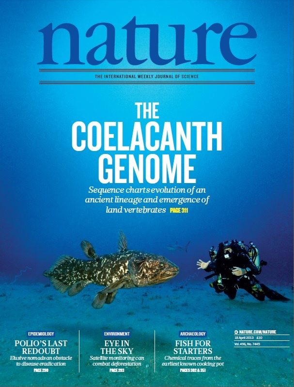 Nature, Volume 496 Number 7445. An African coelacanth and diver photographed by Laurent Ballesta in Sodwana Bay, South Africa. cCelacanths were thought to have gone extinct 70 million years ago. Now its genome has been sequenced. Cover: Laurent Ballesta/Andromède Collection #evolution #genome Nature Publishing Group