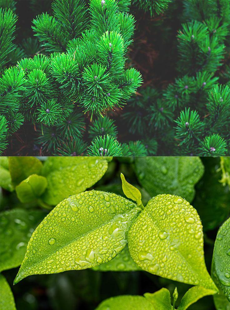 Rośliny Liściaste Czy Iglaste Które Z Nich Wolicie