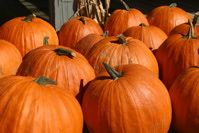 Pumpkin Picking on Long Island: Where to Pick Your Own Pumpkins on Long Island, New York