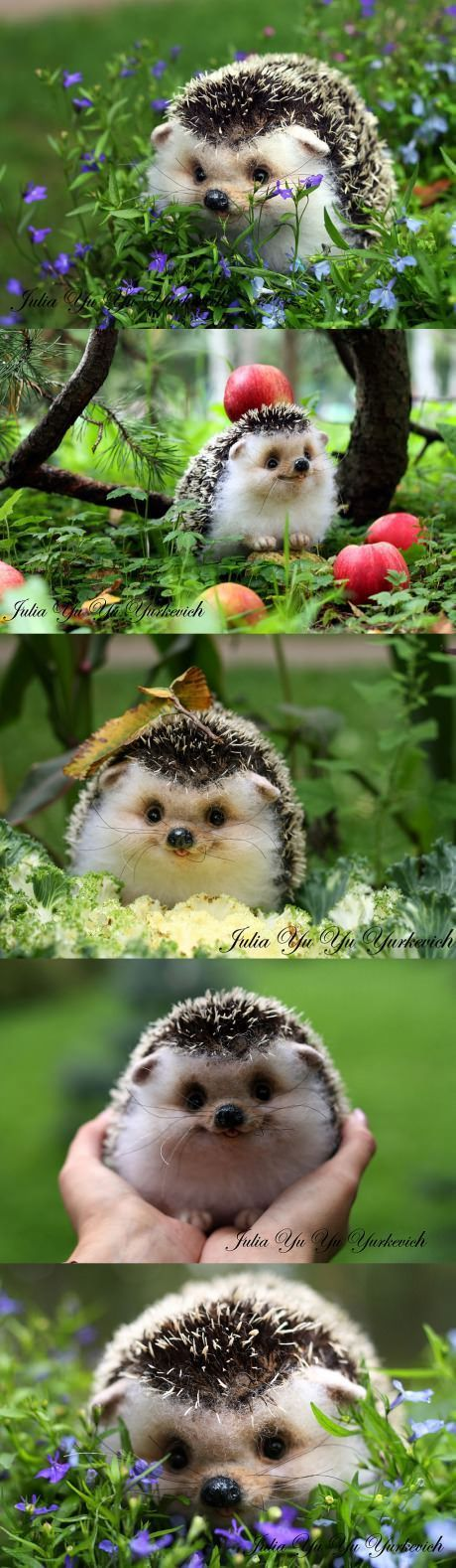 This is like the freaking happiest hedgehog ever.