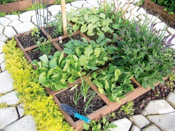 Discover The 4 Most Productive Vegetable Garden Layouts For Any Size Garden.  Free Planting Plans