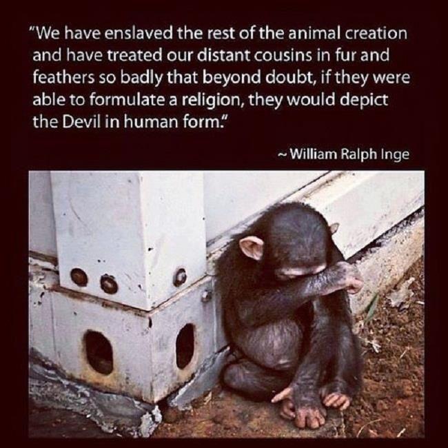 """"""" Nous avons mis en esclavage le reste de la création animale et nous avons si mal traité nos cousins éloignés en fourrure et à plumes que sans le moindre doute, s'ils pouvaient élaborer une religion, ils décriraient le diable sous notre forme humaine."""