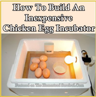 How To Build An Inexpensive Chicken Egg Incubator Homesteading  - The Homestead Survival .Com
