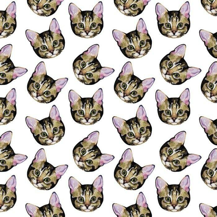 походом картинки коты в стиле тумблер говорили том, что