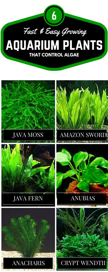 If you are new to keeping live plants here are 6 of the easiest to care for, fast growing plants that can help control algae.