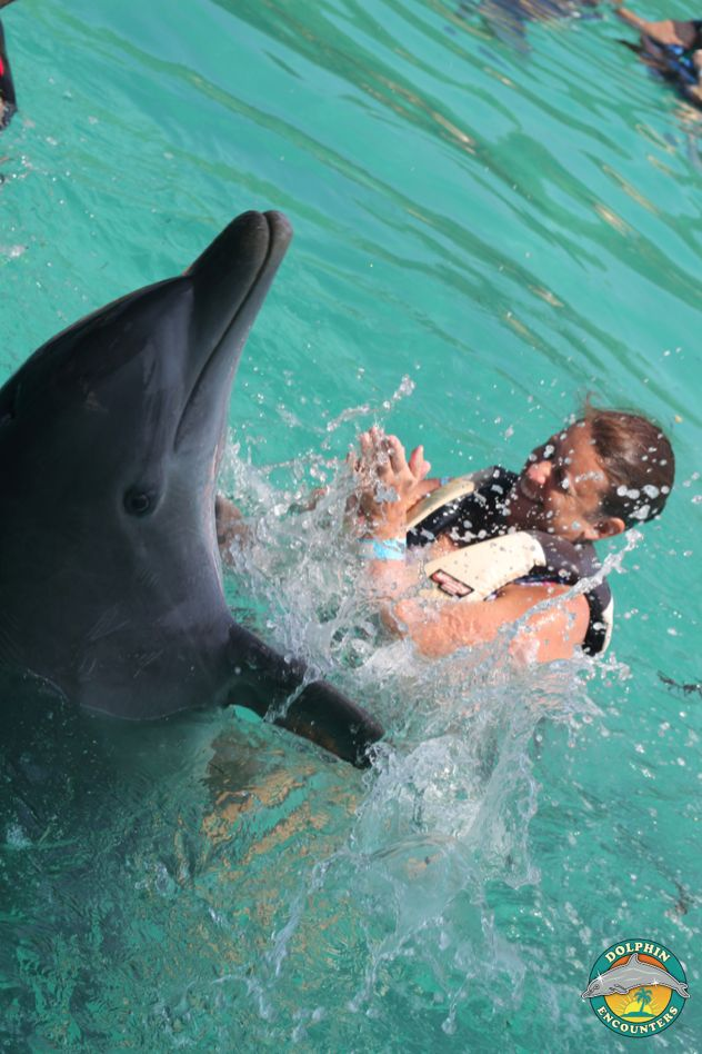 1000+ images about Dolphin Encounters on Pinterest The bahamas, A ...