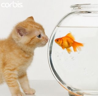 13 best images about goldfish on pinterest cats nice for Fish video for cats