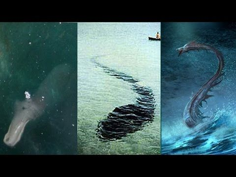 Top 5 Unexplained Sea Monsters Caught on Camera | Top 10's ... Real Sightings Of Monsters