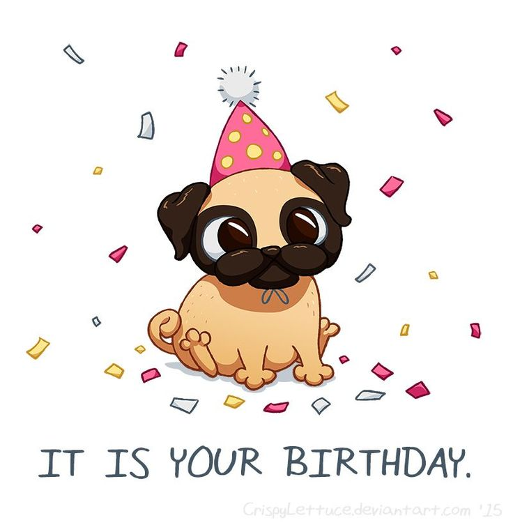 how to draw a birthday pug