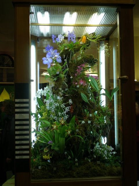17 best images about terrarium on pinterest reptile for Indoor gardening glasses