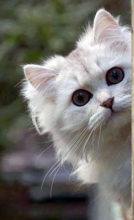http://de-belles-images.blog4ever.com/photos/chats-et-chatons-tout-trognons Ce que j'aime...