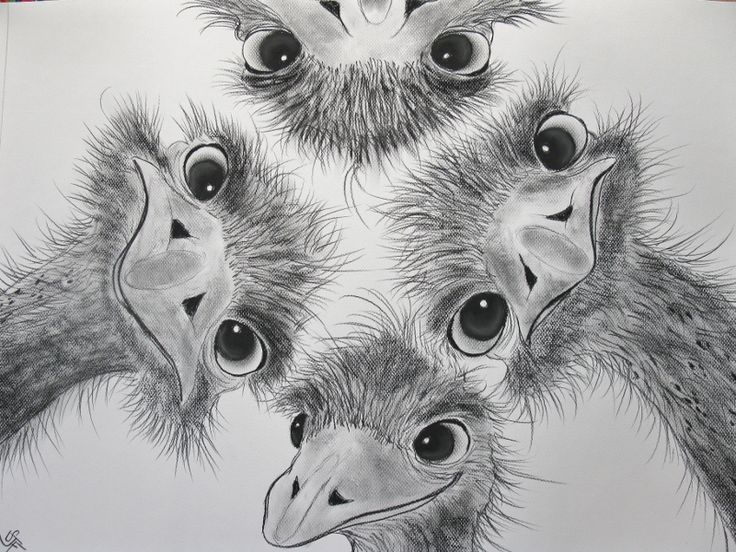animal drawings in charcoal - Google Search