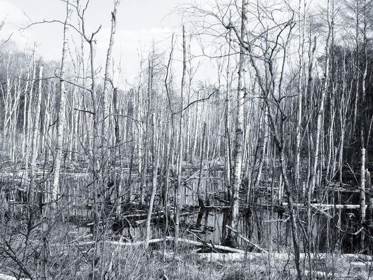 wood/MariuszChudy