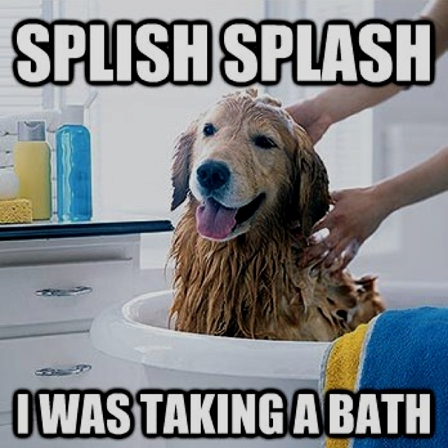 1 teaspoon of liquid soap. Mix together to make a shampoo for your furry pal. Rinse well to remove the shampoo from the fur after vigorously shampooing. You may need to double or triple this recipe depending on the weight of your dog.