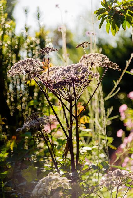My loving home and garden: En augustdag ud i det blå - besøg i Haven i Hune #...