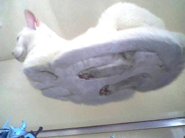 "This is what cats look like underneath when they are in that ""nesting"" position!"