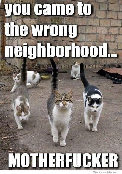 you came to the wrong neighborhood meme
