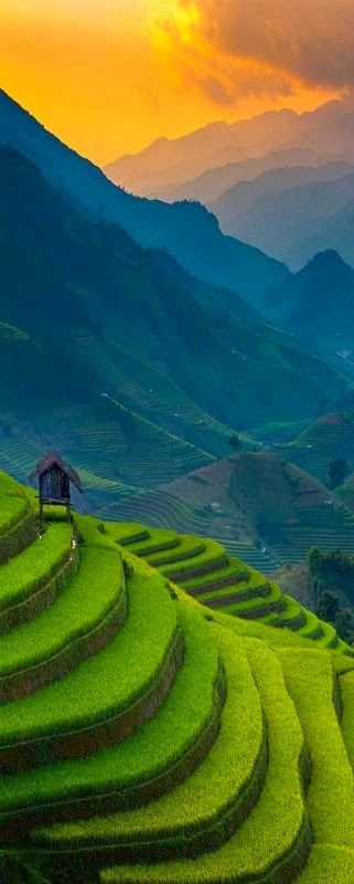 Sunset of Rice Terrace Vietnam
