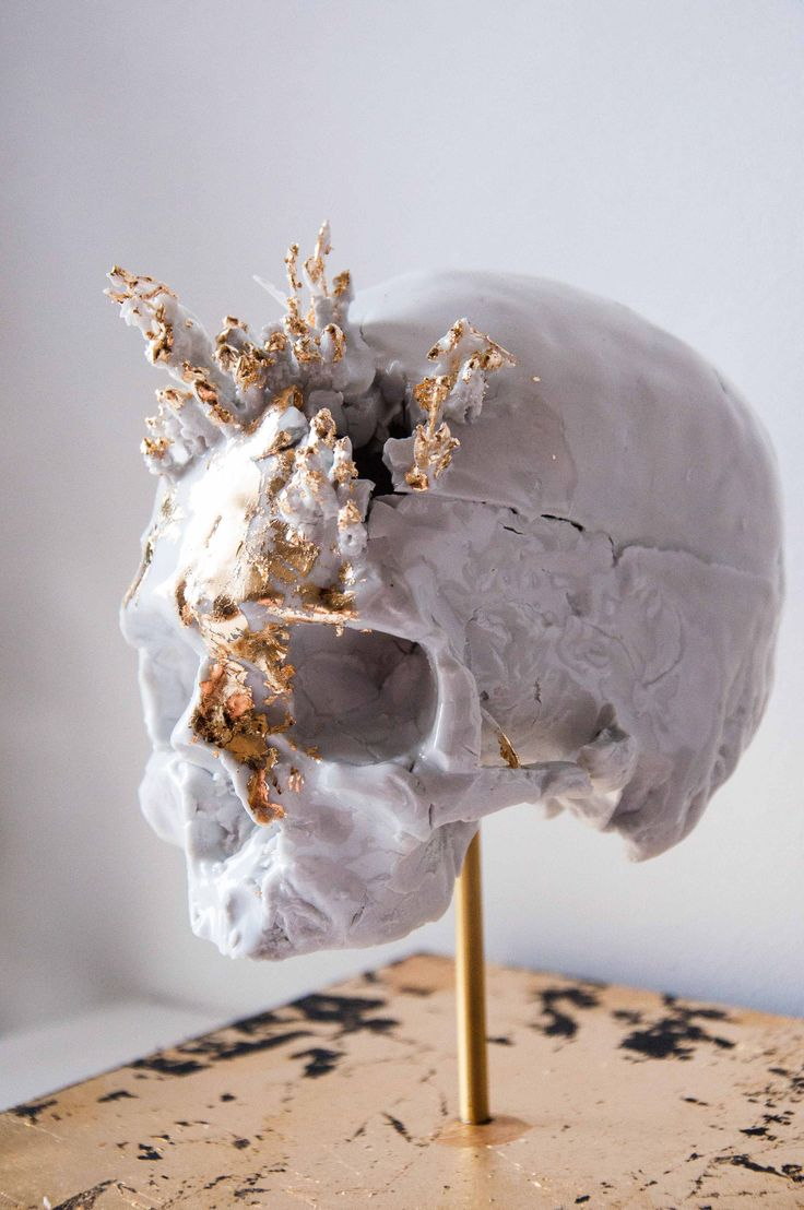 """Charly Bonneau Symbiosis cycle VIII 2015 Sculpture en porcelaine et laiton. Vanité réalisée lors de la résidence """"la porcelaine change de nature"""". Cette série de sculptures en porcelaine interroge notre rapport à la mort.  http://www.latelierdescuriosites.com #latelierdescuriosites #crane #skull #porcelaine #vanity #vanite #wonder #cabinet"""