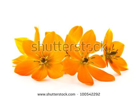 Flower images free stock photos download (10,975 Free stock photos) for commercial use. format: HD high resolution jpg images page (15/289)
