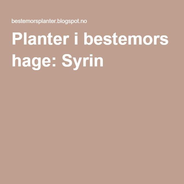 Planter i bestemors hage: Syrin
