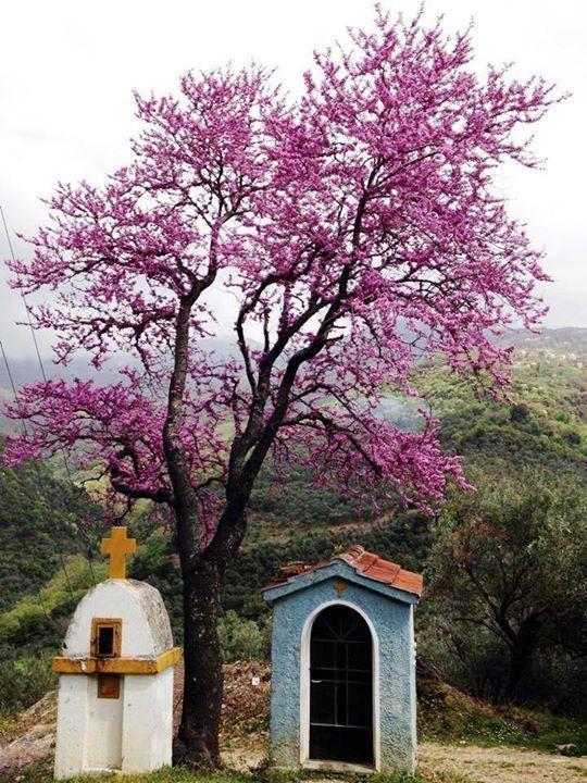 Drakia village at Pelion mountain