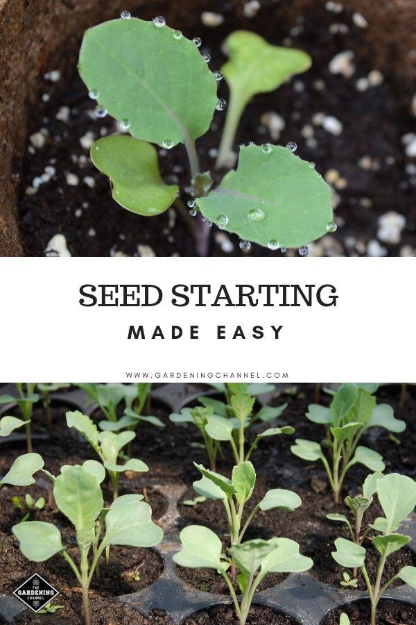 Seedstarting Made Easy Organic Vegetable Garden Home Vegetable