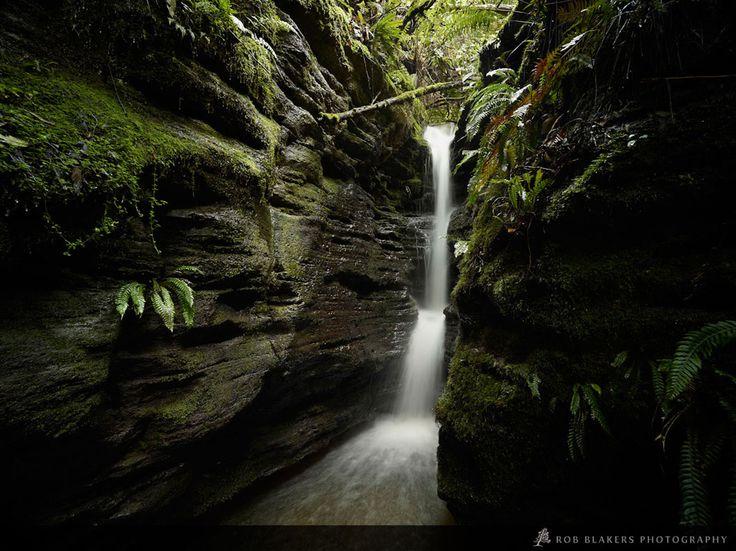 Myrtle Gully, Mt Wellington, Tasmania