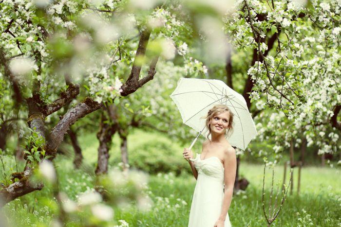 bruid met paraplu tussen de prachtige bloesem