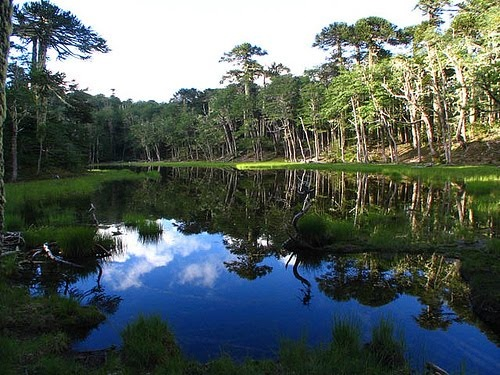 Huerquehue - Sur de Chile. Montañas, lagos y fuertes quebradas. Naturaleza virgen. ¡Imperdible!