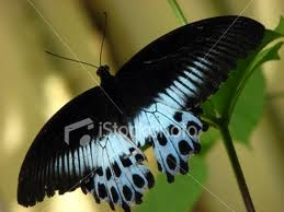 Exotic Butterfly Royalty Free