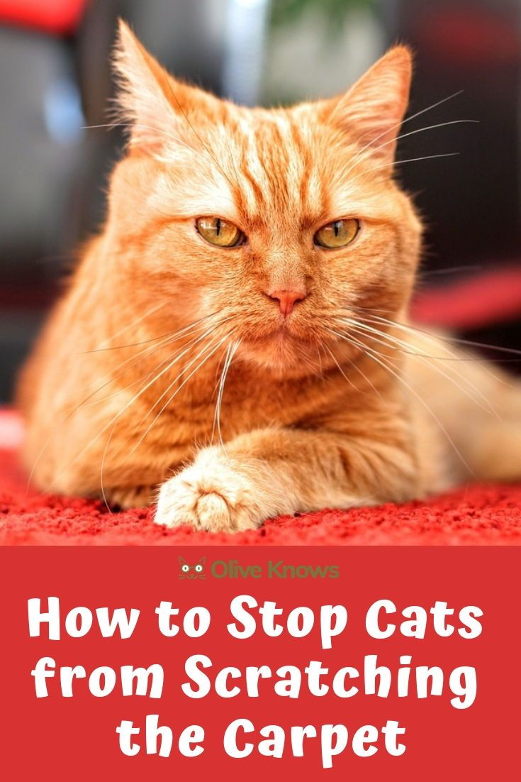 How To Stop Cats From Scratching The Carpet Oliveknows Cats Cat Scratching Cat Scratching Post