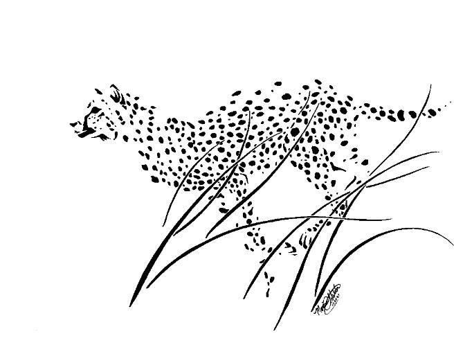 Black_and_White_Cheetah_Running_through_Long_Grass