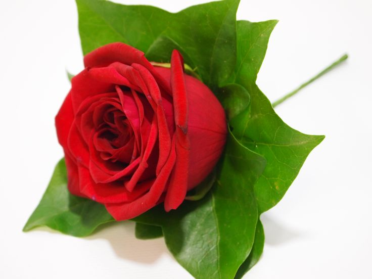 The red rose holds stands for love.... perfect for a groom on his wedding day x
