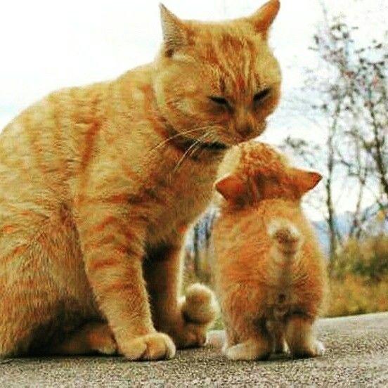 Mini-me kittien