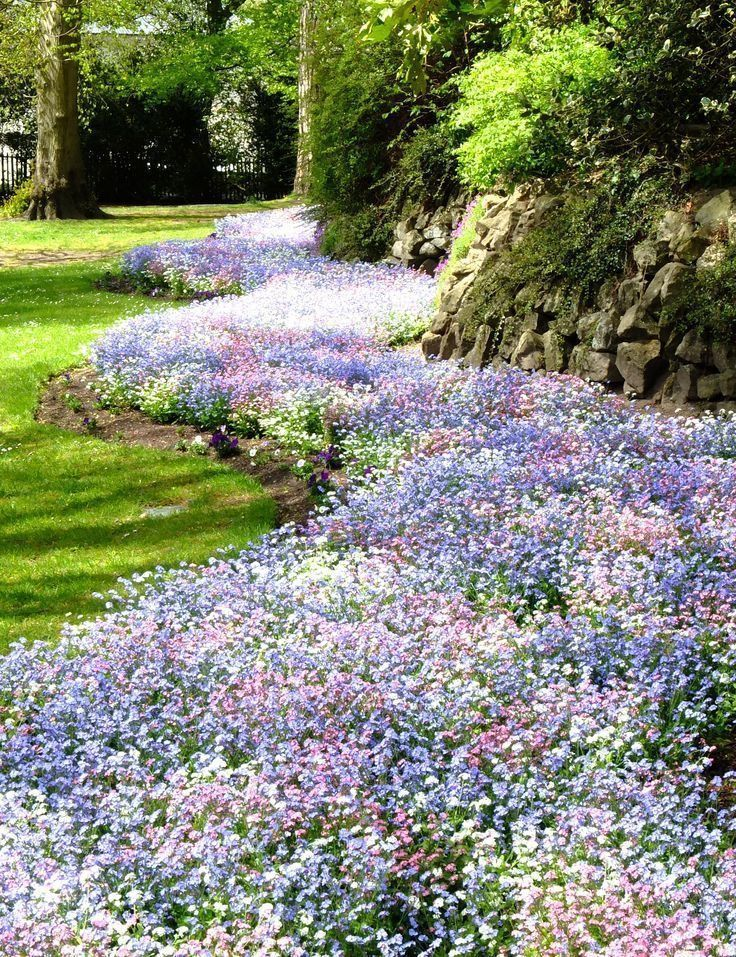 Forget-Me-Nots will produce a lovely blend of pink, white, carmine and blue colored flowers. These tiny flowers bloom through the summer months and stand above attractive green foliage. #gardeningideas #flowers #springtime #ad #garden #landscaping #landscapingideas