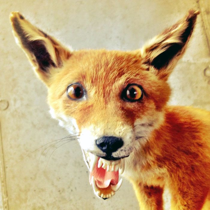 It's Official, The Taxidermist Totally F**ked Up Big Time