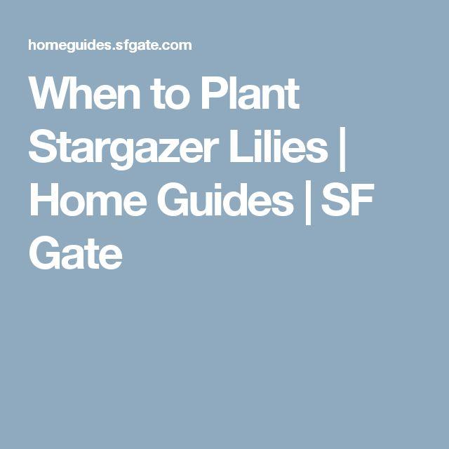 When to Plant Stargazer Lilies | Home Guides | SF Gate
