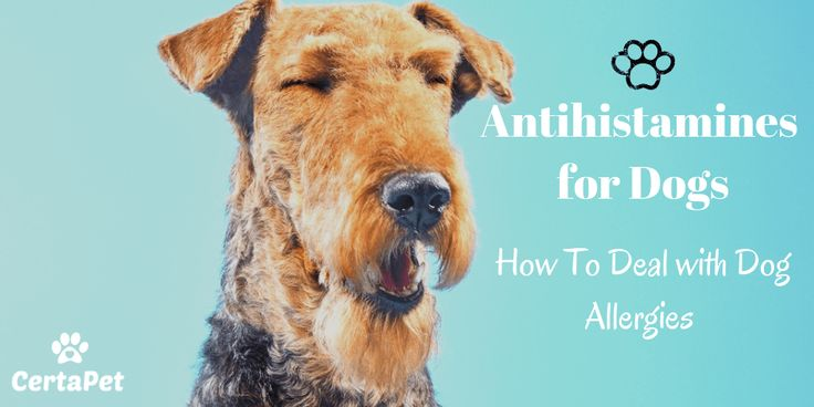 Antihistamines for dogs how to deal with those sneezes