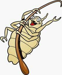 De hoofdluis is een parasiet (Pediculosis capitis) van 2 tot 4 mm die op de hoofdhuid van de mens leeft. Dit insect houdt zichzelf in leven door het bleod dat hij uit de hoofdhuid haalt. Dit geeft jeuk. De eieren van de hoofdluis worden neten genoemd. Ze zetten zich vast op de haren. Het zijn witte bolletjes die heel moeilijk te zien zijn. Hoofdluizen kunnen 2 dagen zonder bloed leven.Daarom kunnen ze overgegeven worden via kledij. Natuurlijk Recept tegen luizen en neten 1. Meng volgende…