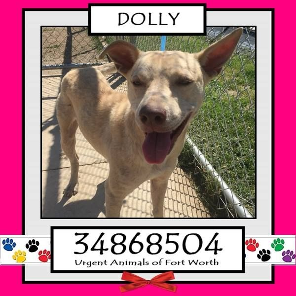 TO BE DESTROYED 04/20/17 ***REASON: MEDICAL*** DOLLY - 1 years old - Pit Bull Terrier Mix - 34868504 - Heartworm Positive, Demodex Mange - #34868504 - FOR MORE PICS, VIDEOS & INFO: http://www.dogsindanger.com/dog/1490551583061