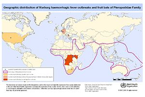 Marburg virus disease is a severe and highly fatal disease caused by a virus from the same family as the one that causes Ebola virus disease. These viruses are among the most virulent pathogens known to infect humans. Both diseases are rare, but have a capacity to cause dramatic outbreaks with high fatality. Two large outbreaks that occurred simultaneously in Marburg and Frankfurt in Germany, and in Belgrade, Serbia, in 1967, led to the initial recognition of the disease. Subsequently…