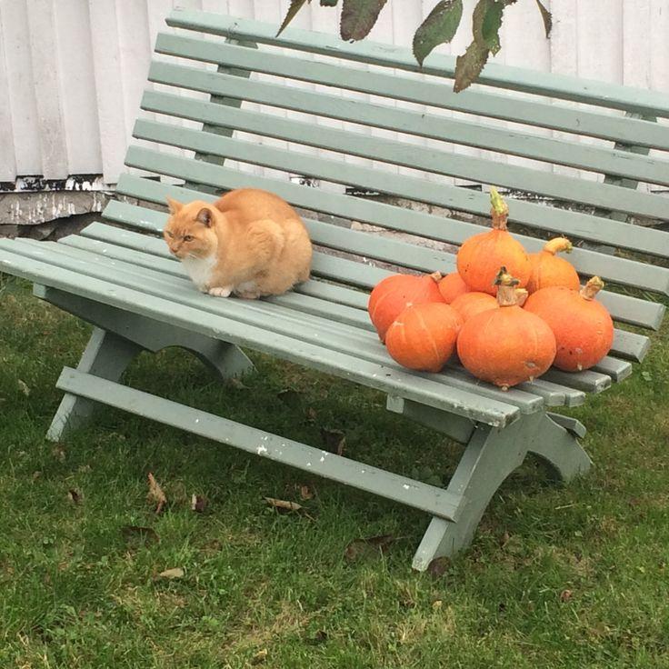 Orange er høstens farge
