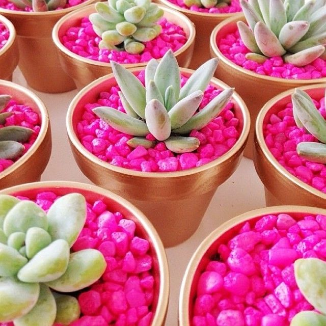 """stitchfix: """"Feeling crafty? Accessorize your home or office space with a fun pop of color! We're loving these adorable succulents made by @jenlaurengrant."""""""