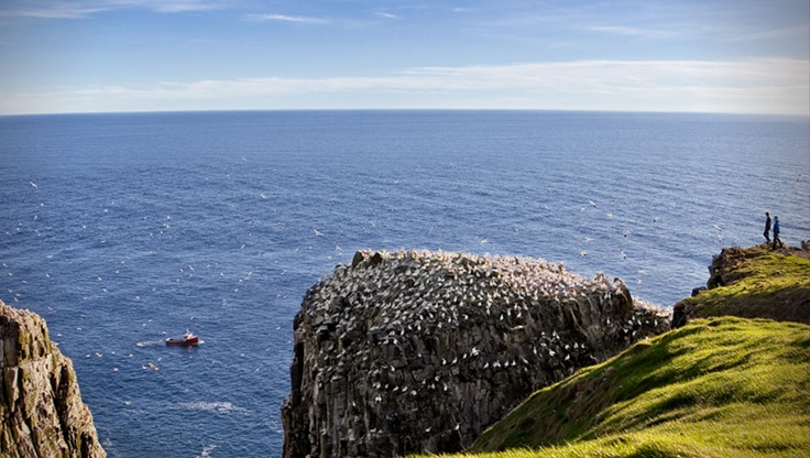 Cape St. Mary's.  Inspiring views and birdwatcher's delight.  One of the places not to miss when you come to Newfoundland