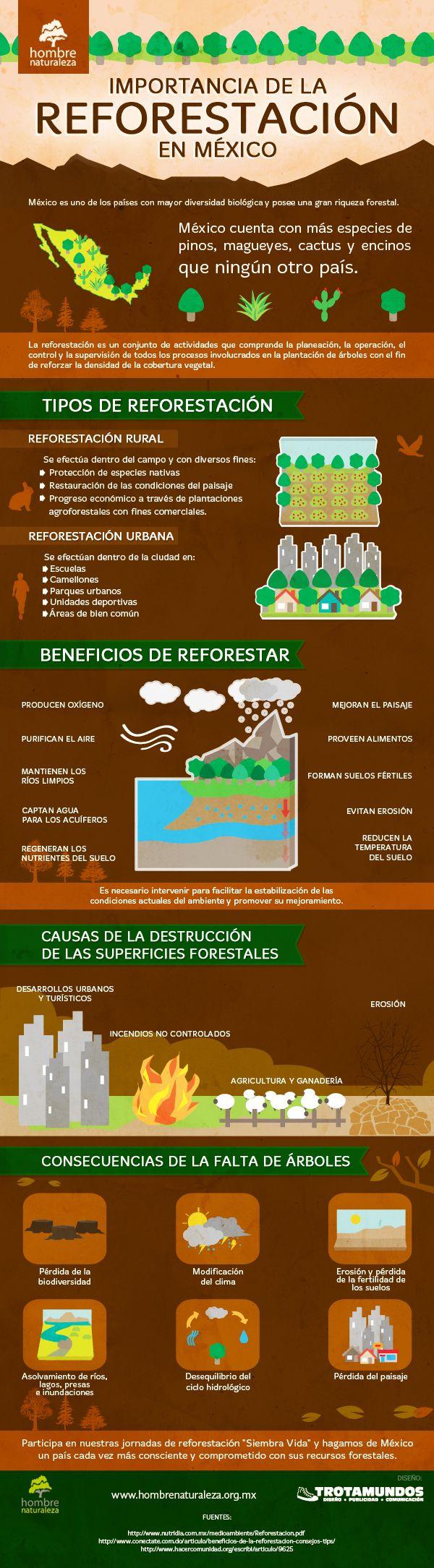 Reforestación en México