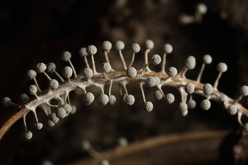 slime mold: Alien Landscapes, Inspiration, Nature, Union, Earth, Aliens, Photo, Slime Molds