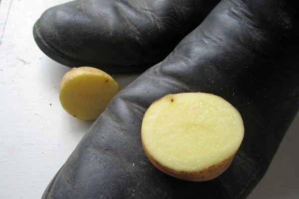 Ezért dörzsölj krumplit a cipődbe!