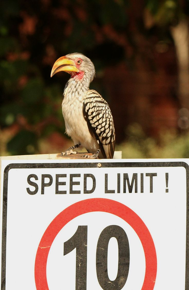 Please keep to the speed limits - Eden Safari Country House